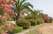 цветущая Сардиния / Италия