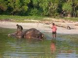 купание слона / Индия