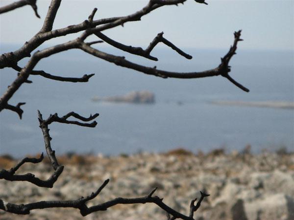Остров Хиос / Фото из Греции