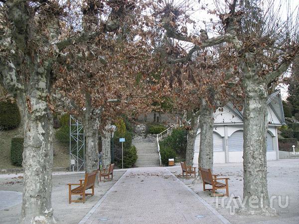 Парк платанов на набережной / Фото из Франции