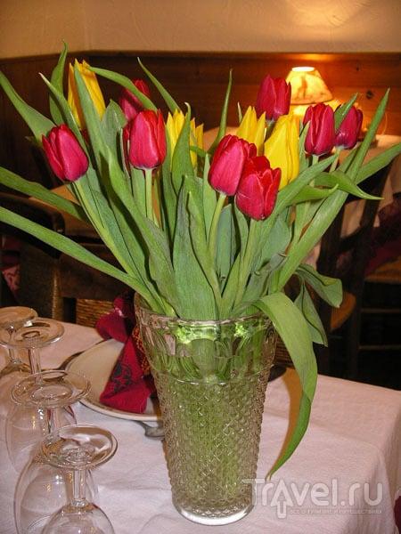 Свежие тюльпаны в феврале / Фото из Франции