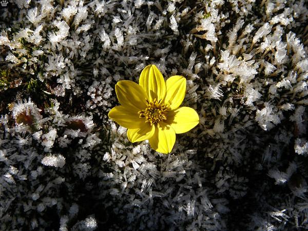 Яркий цветок, Рорайма / Фото из Венесуэлы