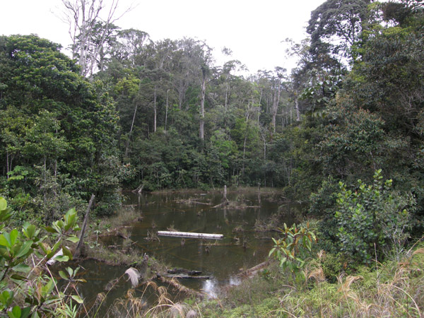 Облачный лес, Рорайма / Фото из Венесуэлы