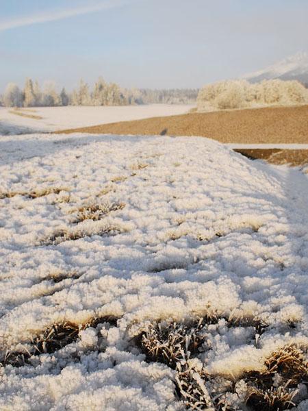 Изморозь украшала деревья, траву, землю... / Фото из Словакии