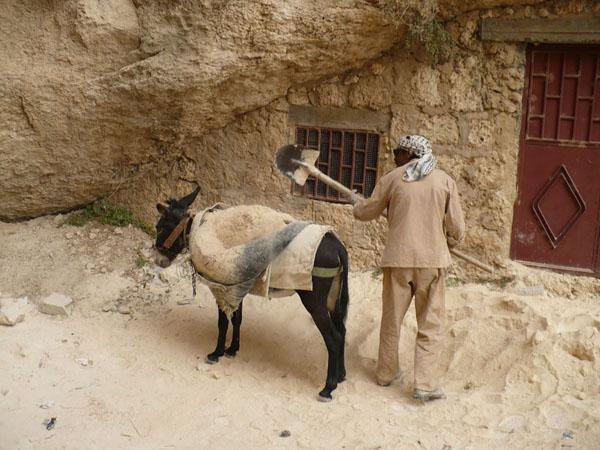 Как тысячи лет назад... / Фото из Сирии