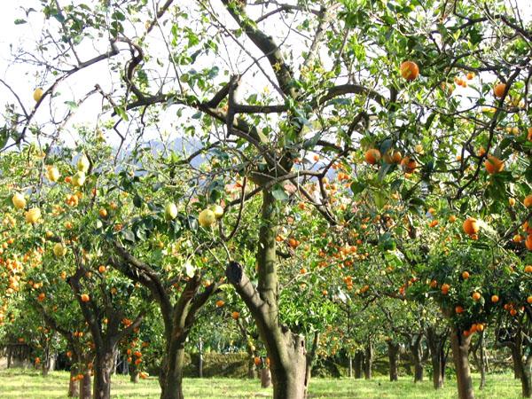 Апрельский урожай / Фото из Италии