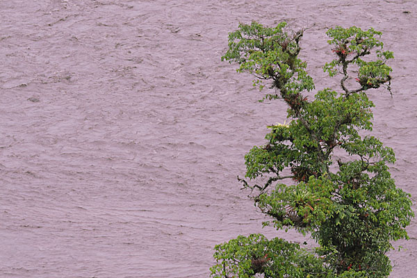 Так зарождается Амазонка, Эквадор / Фото из Эквадора