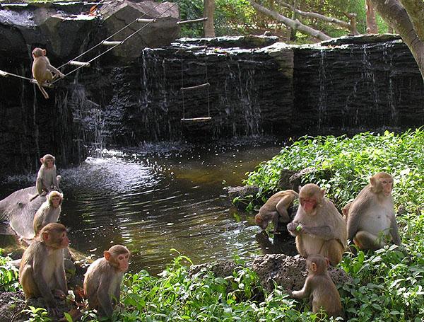 "Жители ""Острова обезьян"" / Фото из Китая"