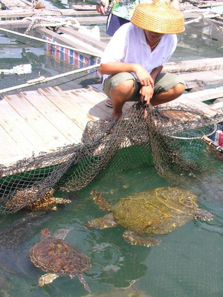 """Ловля черепах и рыбы - повседневные занятия жителей """"водного мира"""" / Фото из Китая"""