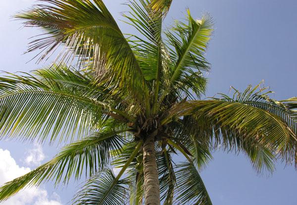 Отдых на райском острове - бесспорный секрет долголетия! / Фото из Китая