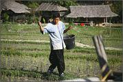 посев риса на севере / Камбоджа