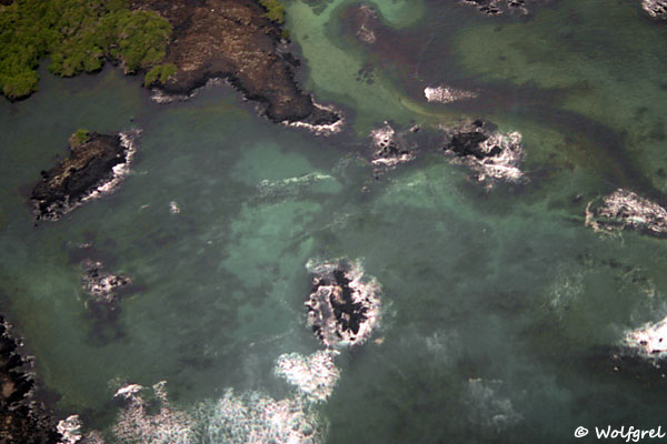 Черно-бурая лава, зеленые мангры и океан - Галапагосские острова / Фото из Эквадора