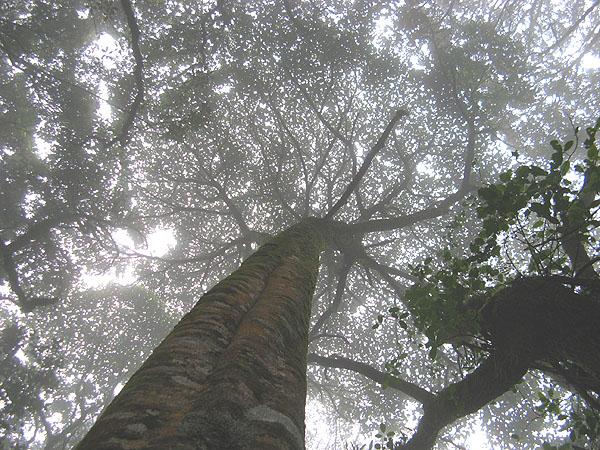 Под огромными деревьями национального парка / Фото из Танзании