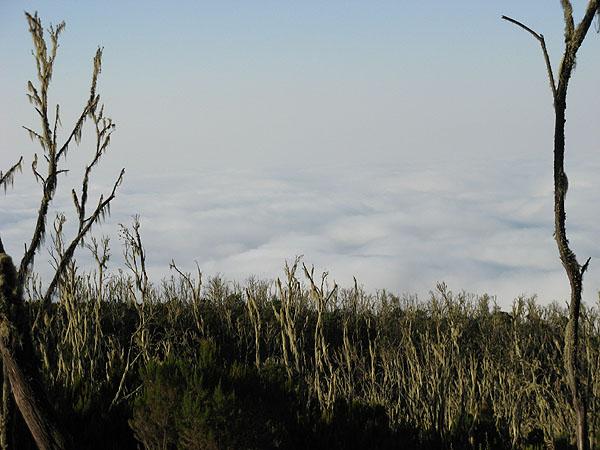 На пути к покорению Килиманджаро / Фото из Танзании