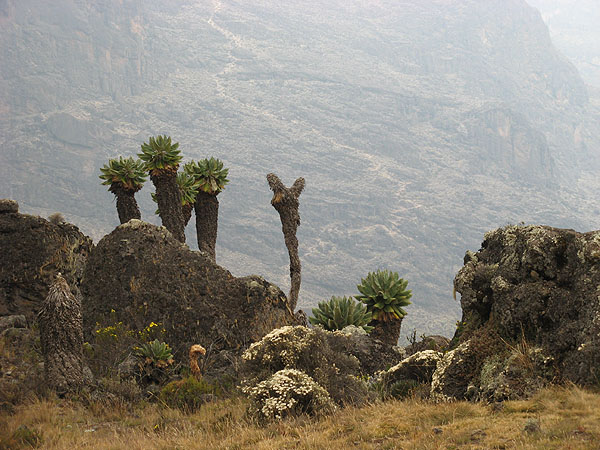 Пейзажи неземной красоты, Килиманджаро / Фото из Танзании