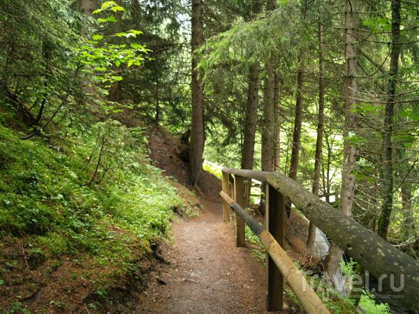 Лесная тропинка в Лойкербаде / Фото из Швейцарии