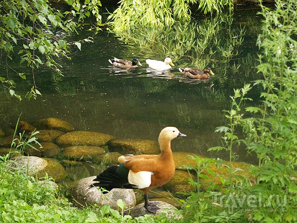 Пруд с цветными птицами / Фото из Швейцарии