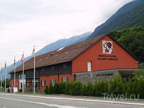 Музей сенбернаров в Мартиньи / Фото из Швейцарии