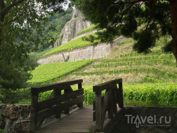 Виноградники в Мартиньи / Фото из Швейцарии