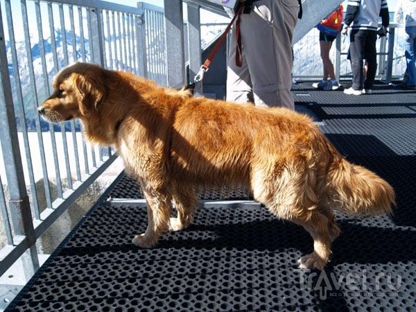 Собака-путешественница / Фото из Швейцарии