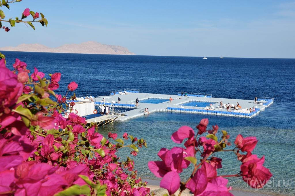 """""""Горит """" Египет на двоих отель 5***** на 7 дней (все включено) Египет Шарм Эль Шейх Domina Coral Bay Aquamarine Beach..."""