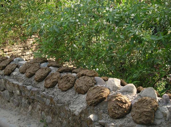 Высушенные коровьи лепешки - топливо и строительный материал / Фото из Индии
