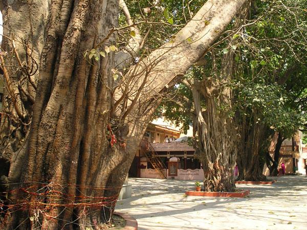 Внутренний двор ашрама в Ришикеше / Фото из Индии