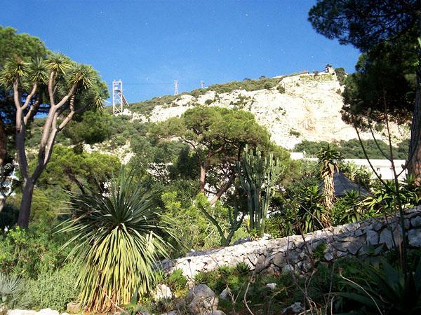 В ботаническом саду, Гибралтар / Фото из Марокко