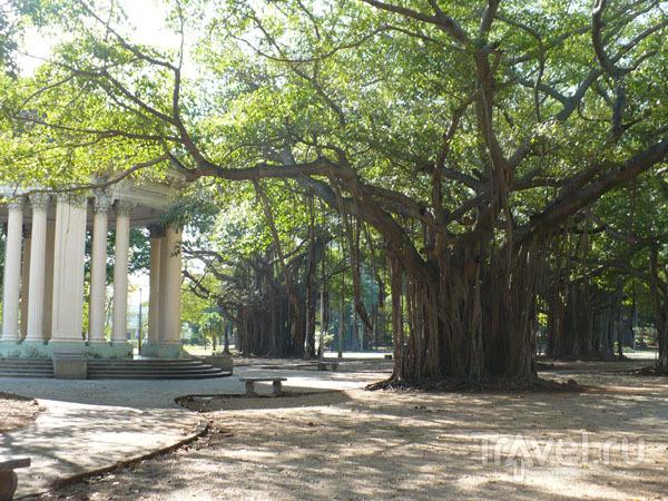 Парк в Мирамаре / Фото с Кубы