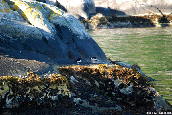 Ранним утром на берегах Согне-фьорда  / Фото из Норвегии