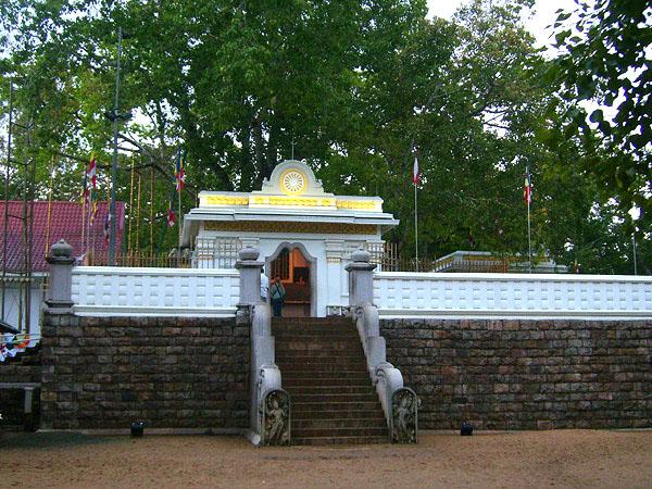 Дерево Бо окружает золотая ограда, Шри-Ланка / Фото со Шри-Ланки