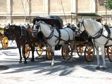 лошади / Испания