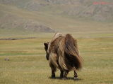 як / Монголия