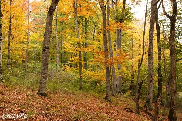 Осень в лесах Армении / Фото из Армении