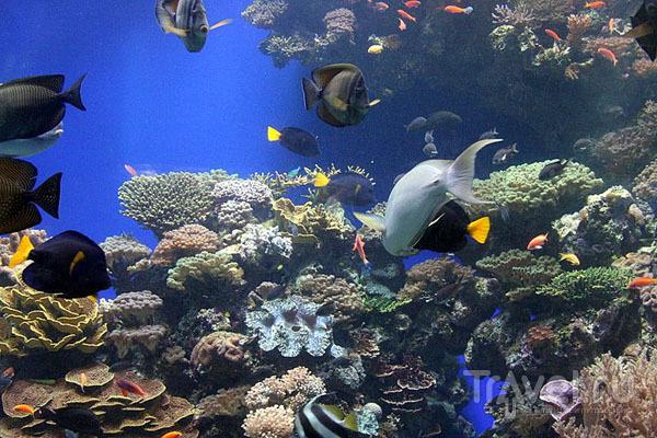Рыбки в океанариуме, Эйлат / Фото из Израиля