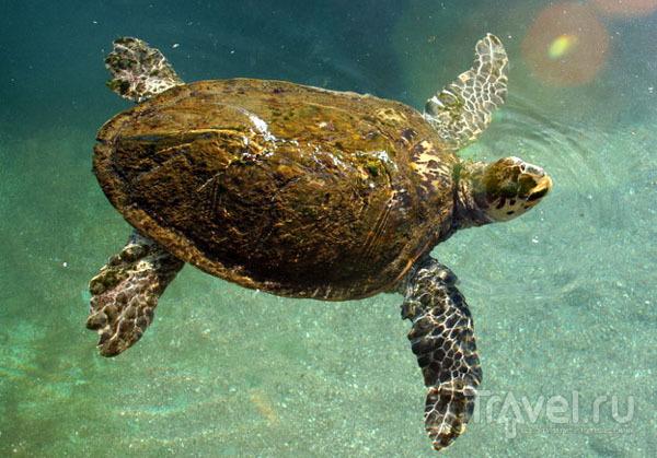 Бассейн с черепахами в океанариуме, Эйлат / Фото из Израиля