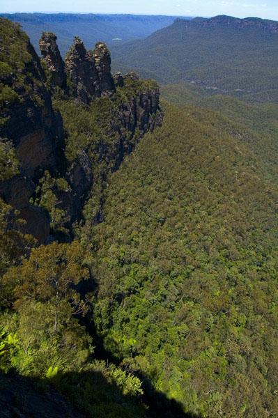 Нетронутые леса австралии фото из