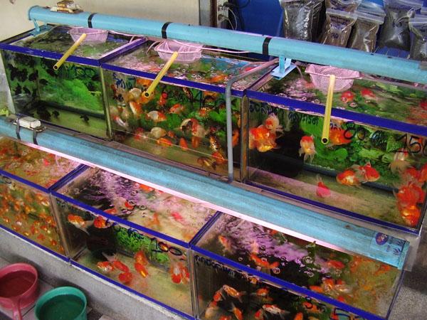 Рыбки на продажу, Бангкок / Фото из Камбоджи