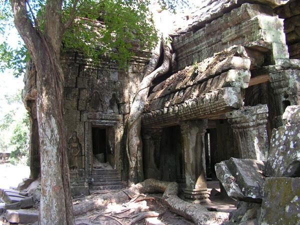 Стены храма Та-Пром  / Фото из Камбоджи