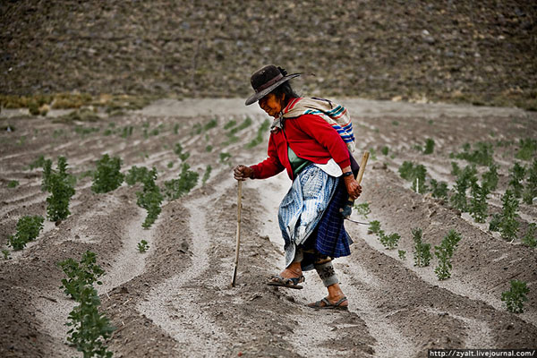 Индианка на поле в Боливии / Фото из Боливии