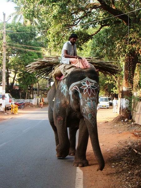 Слониха Лакшми, Индия / Фото из Индии