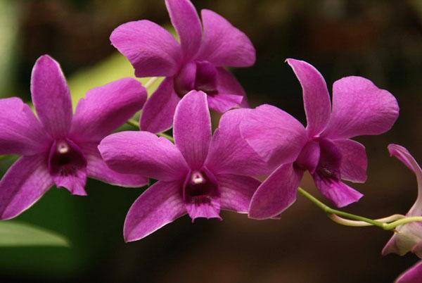 Зал орхидей, ботанический сад Перадения / Фото со Шри-Ланки