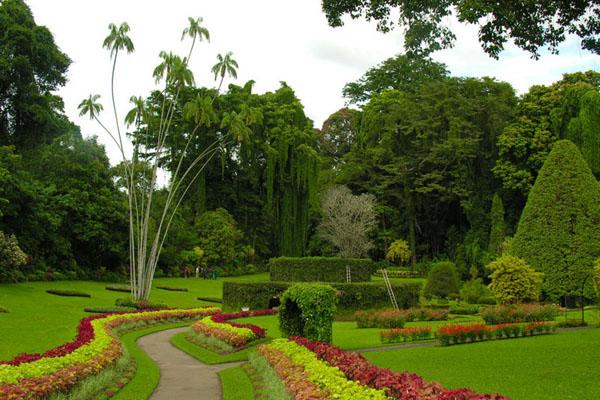 Королевский ботанический сад Перадения, Шри-Ланка / Фото со Шри-Ланки