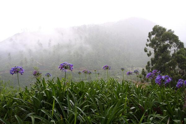По дороге в Нувара-Элию, Шри-Ланка / Фото со Шри-Ланки