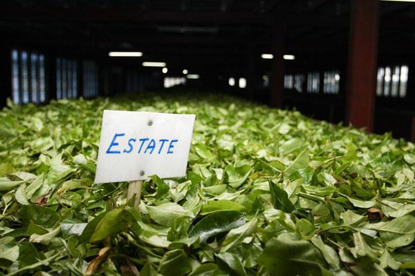 На одной из чайных фабрик Нувара-Элии / Фото со Шри-Ланки