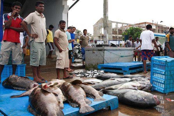 Рыбаки со свежим уловом, Хиккадува / Фото со Шри-Ланки