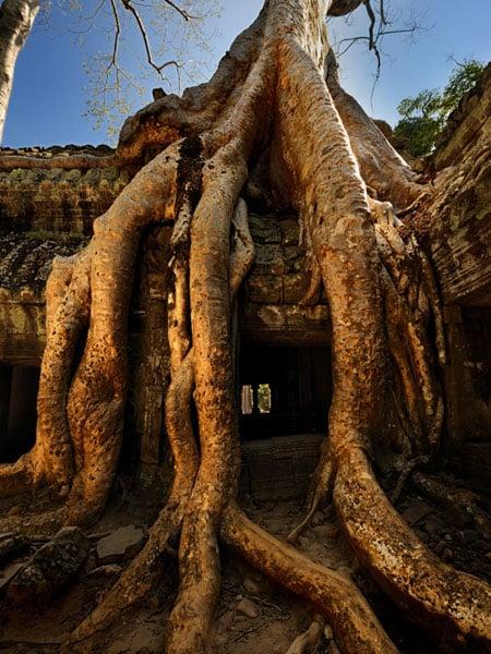 Массивные корни на стенах храма Та-Пром, Камбоджа / Фото из Камбоджи