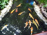 Аэропорт Changi, пруд с рыбками / Сингапур