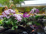 Аэропорт Changi, цветы / Сингапур