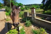 Лошадь / Турция